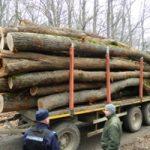 hoti lemne jandarmi